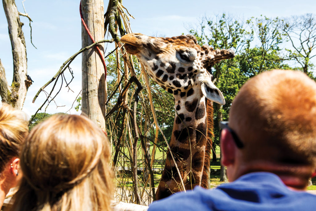 Visitors look at the giraffes at Knowsley Safari